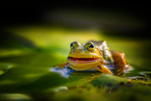 A Frog Sitting In Water.