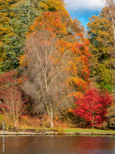 Fototapety, obrazy: Autumn landscape beautiful colored trees over the lake glowing in sunlight. wonderful picturesque background.