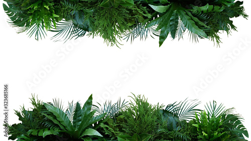 Fotografía Green leaves nature frame layout of tropical plants bush (Monstera, palm, fern, rubber plant, pine, birds nest fern) foliage floral arrangement on white background with clipping path