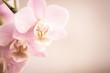Orchideenblüten in rosa pink mit Freiraum