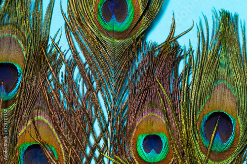 Naklejki paw   composition-of-several-peacock-feathers-on-a-blue-background