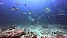 Underwater Life Of Sharks And ...