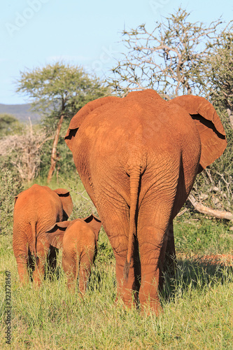 Mother with two small elephants walking away Wallpaper Mural