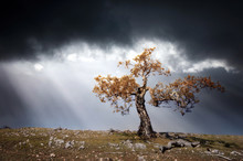Lonely Tree Against A Dramatic Sky