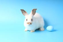 Happy White Bunny Rabbit With ...