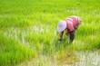 Leinwanddruck Bild - farmer working in field