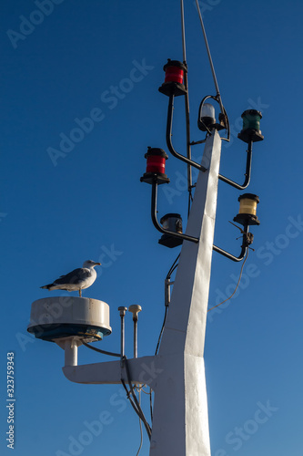 Fotografie, Tablou Detail of the mainmast and seagull