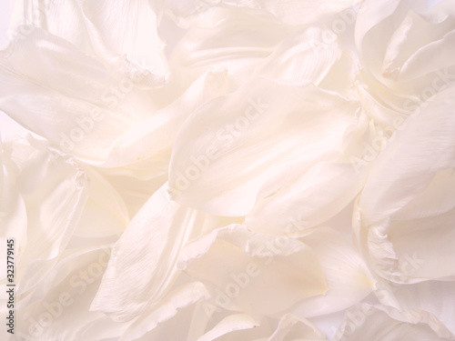 Fototapety, obrazy: Blur abstract background. Macro of white, pink and nude petals texture. Soft dreamy image.