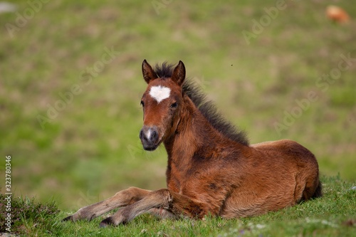 Brown foal lying on the ground surrounded by hills covered in greenery with a blurry background