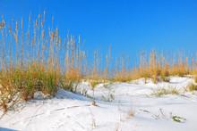 White Sand Dunes Along Florida...