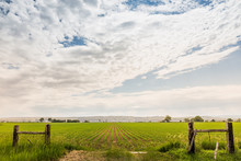 View Over Fields Being Irrigated In Rural Setting. Montana, USA