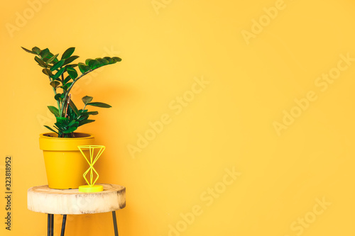Table with houseplant near color wall in room