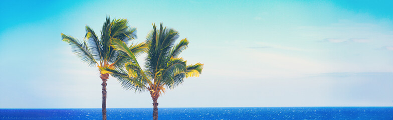 Beach travel Summer banner background of blue ocean and palm trees panorama, tropical Caribbean travel destination. Horizontal copy space header.