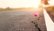 Leinwandbild Motiv Close up, Pink flower growing on crack street sunset background