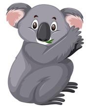 Cute Koala Eating Leaves On White Background