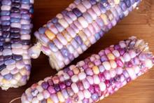 Heirloom Glass Gem Corn From Garden 3
