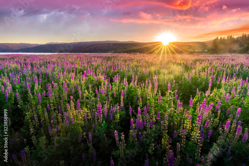Fototapeta Purple wild flowers meadow, sun rays through the montains with dramatic clouds obraz na płótnie