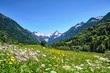 canvas print picture -  Alpen, Blumenwiese in den Bergen mit Schnee auf Gipfel