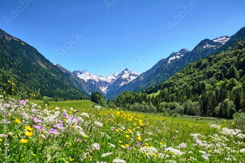 Alpen, Blumenwiese in den Bergen mit Schnee auf Gipfel Canvas Print
