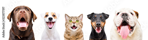 Obraz na płótnie Portrait of five cute funny pets, closeup, isolated on a white background