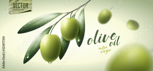 Fototapeta Vector realistic illustration. Green olives, leaves and paper icon. obraz