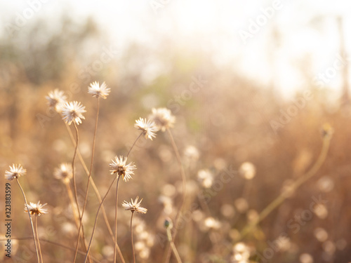 Fototapety, obrazy: Grass flowers on the sidewalk, Nature background