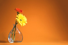 Two Gerberas On The Orange Background