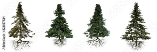 group of conifer trees with roots isolated on white background Fototapet