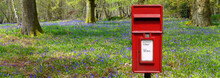 Red British Post Box In Spring Woodland