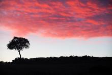 Silhouette Of An Oak Tree