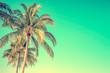 Leinwanddruck Bild - Palm tree on blue sky background with copy space, vintage style