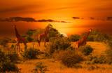 Giraffen und Sonnenuntergang im Nationalpark Tsavo Ost und Tsavo West in Kenia