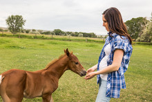 Pregnant Woman Pets And Leads A Mare With A Fresh Colt In A Pasture. Bridger, Montana, USA