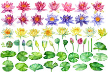 Big Set Of Flowers Lotus. Bds, Seed, Leaves On Isolated White Background, Watercolor Painting, Hand Drawing, Botanical Illustration