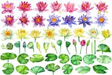 Big Set Of Flowers Lotus. Bds,...