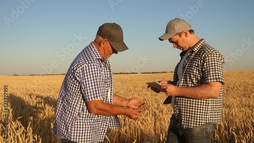 Fototapeta businessman and farmer with tablet working as team in the field. agronomist and farmer are holding a grain of wheat in their hands. Harvesting cereals. A business man checks the quality of grain. obraz