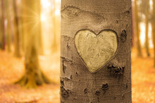 Carved Heart On A Tree During Romantic Sunset