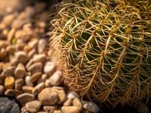 Closeup Image Of Sharp Thorns ...