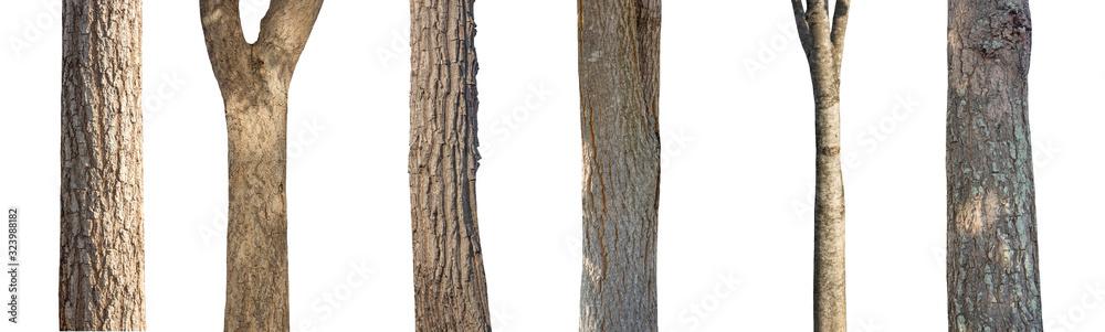 Fototapeta isolated set tree trunk Collection on White background.