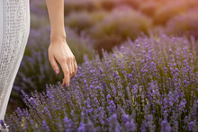 Crop Female Touching Lavender ...