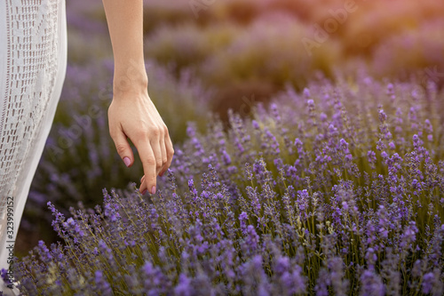 Photo Crop female touching lavender flowers in field