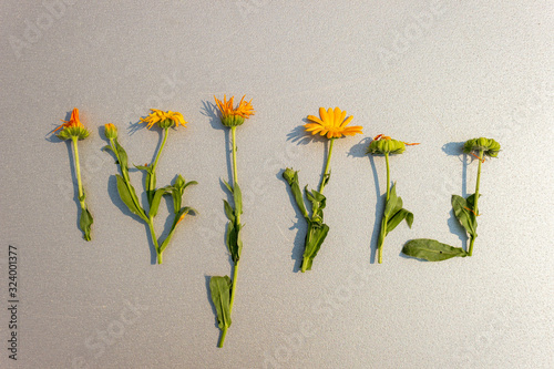 Fotografie, Obraz One line of calendula flowers of varying degrees of flowering and wilting with a simple gray background