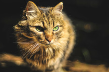 Cute Serious Cat With Green Eyes And Healthy Whiskers Sitting On Sunlight And Looking Away