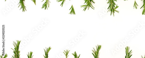 Obraz rosemary leaves  frame isolated banner on white background. copy space. flat lay, top view. - fototapety do salonu