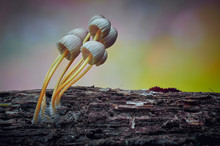 Macrophotograph Of A Fungus Or...