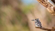 Oiseaux - Masaï Mara Kenya