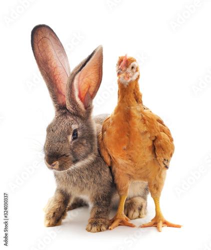 Foto Chicken with rabbit.
