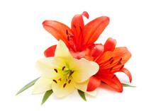 Three Orange Lilies.