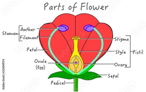 Flower parts diagram Canvas Print