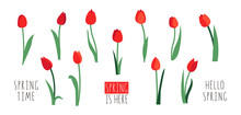 Vector Set Of Red Tulip Flower...